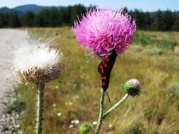 Пеперуди през размножителния период