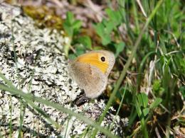 Пеперуда - едни от най-красивите и интересни същества в природата ни.