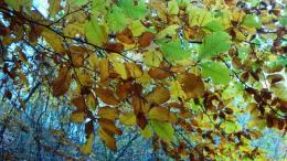 Златни есенни листа.